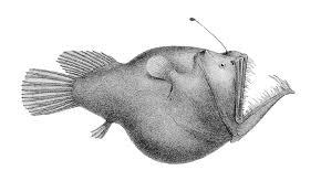 σκίτσο angler fish